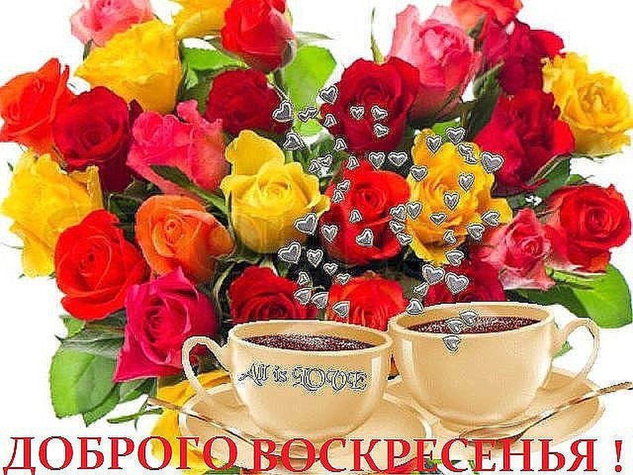 Лучшие розы мира картинки различие возможности